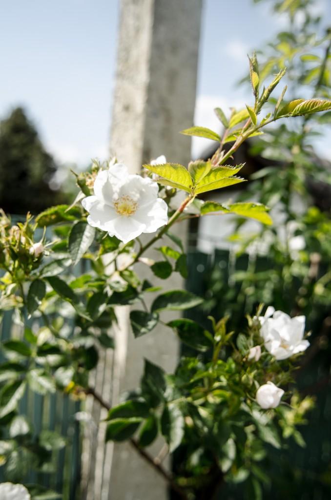 Il faut cultiver son jardin yann eunice parodi for Candide cultiver son jardin